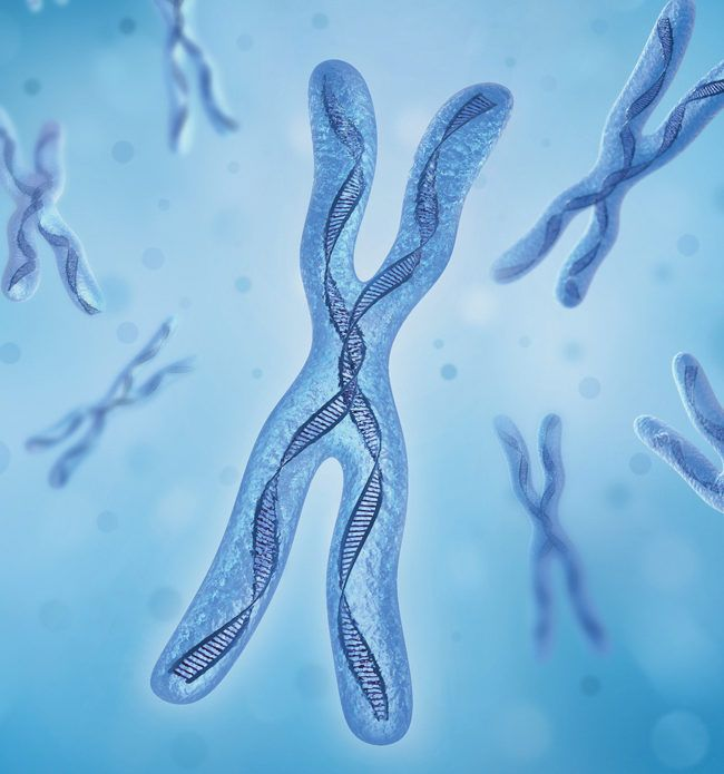 """A """"Human Reproduction"""" study shows that IVF embryos chromosomal abnormality is very higher than in natural reproduction An aggregate risk of this practice"""