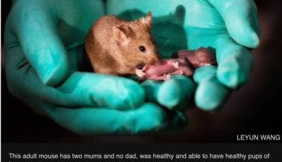 Mice produced form same sex parents prove the technical possibility of crossing the barriers of biiparental reproduction in mammals.
